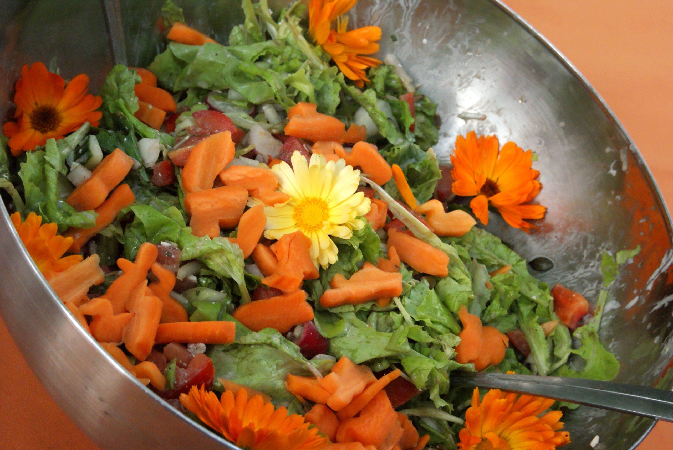 Gartenpiraten: Salat aus selbst geerntetem Gemüse