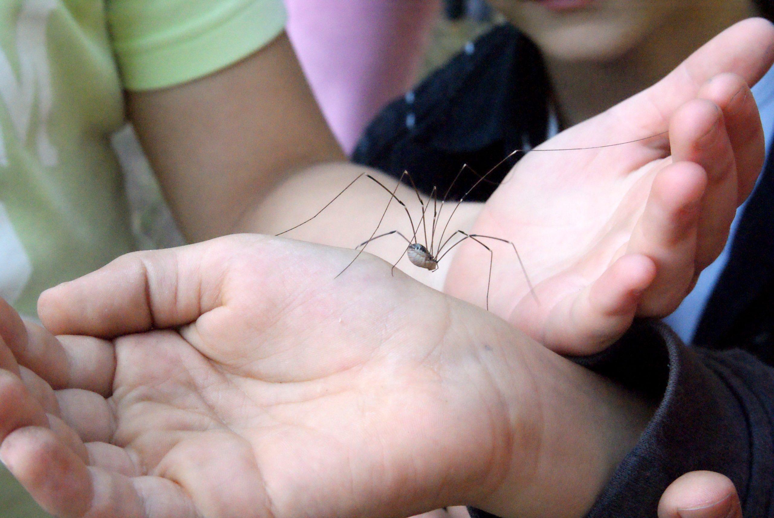 Gartenpiraten: Keine Angst vor Spinnen